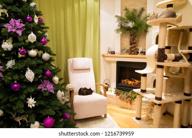 Christmas living room decorated to celebrate Christmas and New Year. Christmas tree with white and violet, purple, pink christmas handmade toys. Sleeping cute cat, ocicat pedigree and burmese cat.