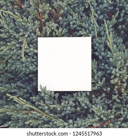 Christmas mock up on evergreen plants background. Flat lay, top view.