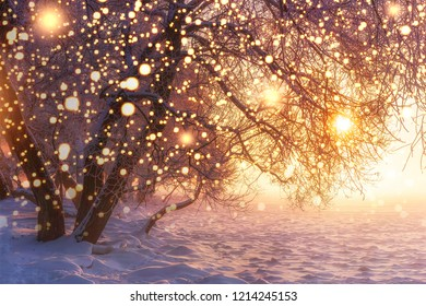 Christmas. Nature. Winter landscape with shining snowflakes. Glowing lights on Xmas holidays. Frosty trees in sunlight. Sunshine. Snow and Frost. Magic winter nature. Winter wonderland.