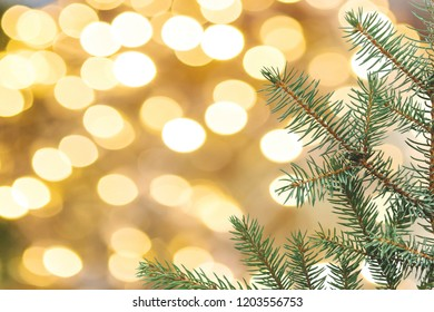 Christmas or New Year background. Green branch of the Xmas tree on a golden background.