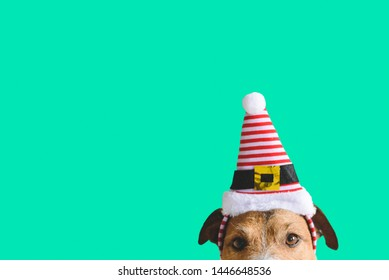 Christmas and New year holidays concept with dog wearing hat of Santa Claus assistant elf