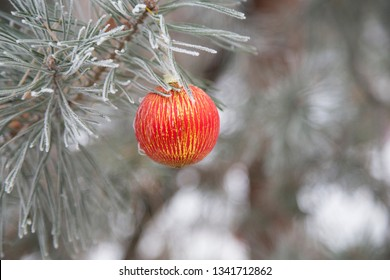 Christmas orange ball on a branch of pine. Close-up.