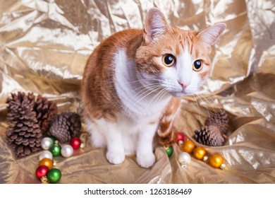Christmas orange and white tabby cat wide eyed curious on a wintery scene gold shiny fabric backdrop pinecones and ornaments