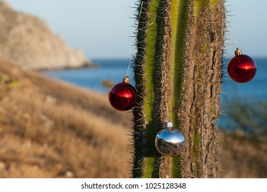 Christmas ornaments decorating a cactus on the beach in Baja California Sur, Mexico.