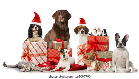 Dog Cat Christmas Images Stock Photos Vectors Shutterstock