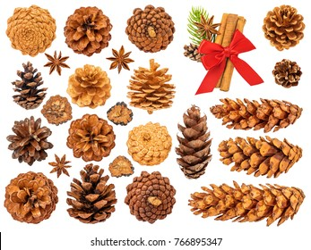 Christmas Pine Cones Isolated on White Background. Contains different types of cones, spices, star anise.