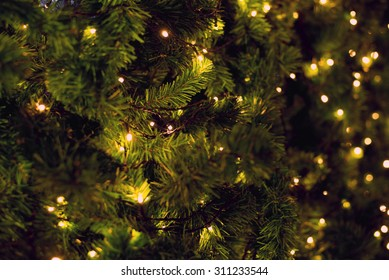 Christmas pine tree with light bokeh on blurred background for your design