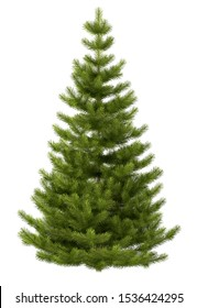 Christmas pine tree on a white background.