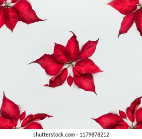 Christmas poinsettia flowers pattern on white background, top view, flat lay