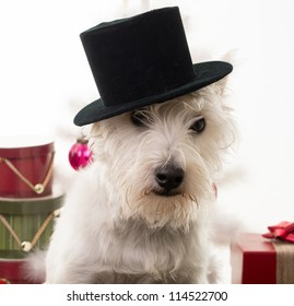 Christmas puppy dog in a top hat