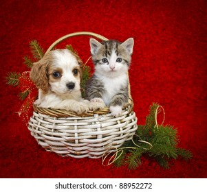 jstaley401 s christmas puppies and kittens set on shutterstock