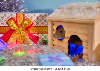 Christmas rat. Symbol of the new year 2020 . Year of rat. Chinese new year 2020. Presents to the gray rat for Christmas. gifts rat house Christmas