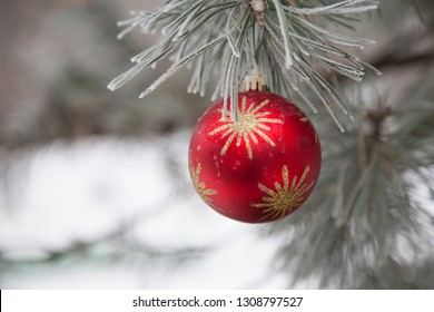 Christmas red ball on a branch of pine. Close-up.