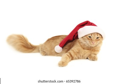 christmas red cat isolated on white background