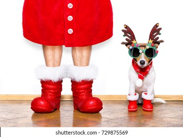 christmas  santa claus  jack russell dog isolated on white background with reindeer  hat and  red boots for the holidays waiting and sitting