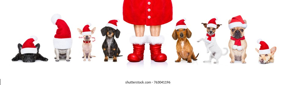 christmas  santa claus row of dogs isolated on white background,  with   funny  red holidays hat  and boots