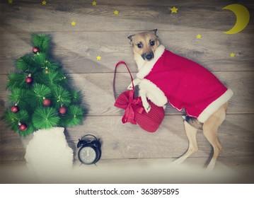Christmas set, dog