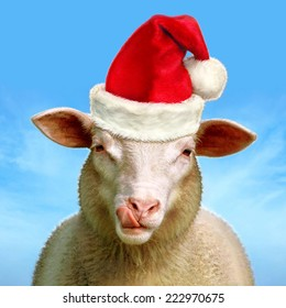 Christmas sheep - Digital image processing from photo.