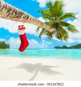 Christmas sock with gifts on palm tree at exotic tropical beach. Holiday concept for New Years Cards. Seychelles, Mahe island