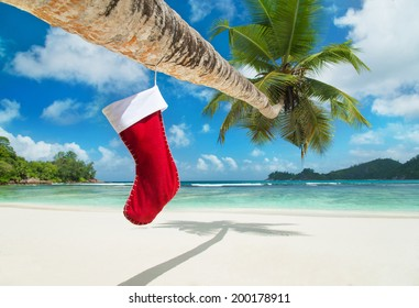 Christmas sock on palm tree at exotic tropical beach. Holiday concept for New Years Cards.