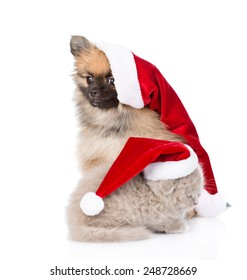 christmas spitz puppy and scottish kitten in santa hats looking away. isolated on white background