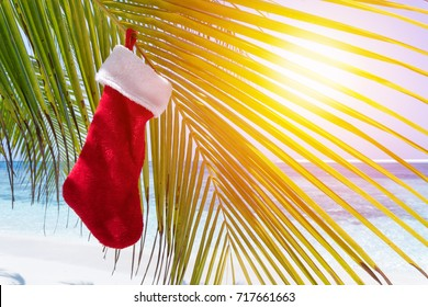 Christmas stocking hanging on coconut palm tree leaf at tropical sandy beach. New Year celebration on seashore.