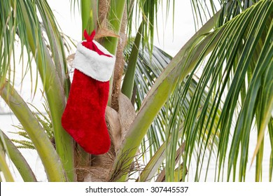 Christmas stocking on coconut palm tree. Holiday concept