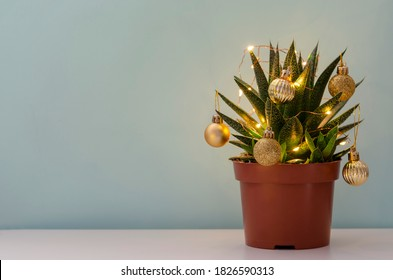 Christmas succulent with golden balls and garland on blue background, space for text