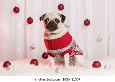Christmas theme photoshoot with an adorable pug.