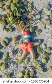 Christmas themed starfish bathes in a red bikini next to seed pods on New Smyrna Beach, Florida.