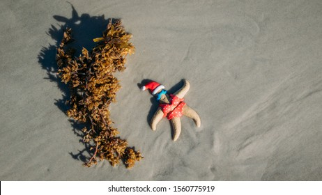 Christmas themed starfish sunbathes in a red bikini next to seaweed on New Smyrna Beach, Florida.