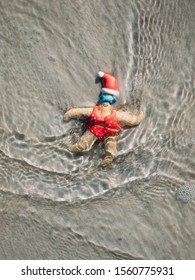Christmas themed starfish in the waves on New Smyrna Beach, Florida.