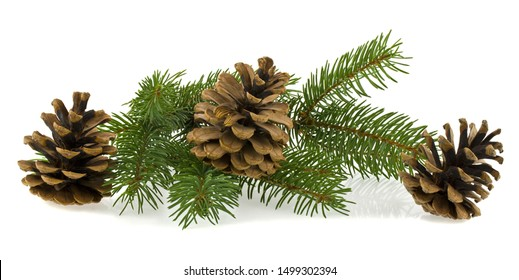 Christmas tree branch with a cone isolated on white background