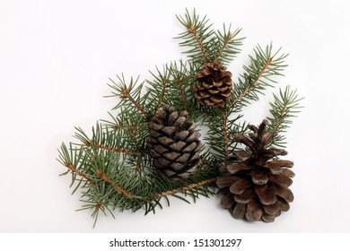 Christmas tree branch with cones