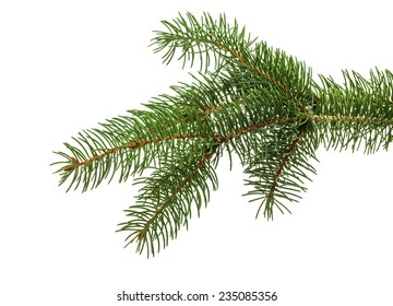 Christmas tree branch isolated on the white background