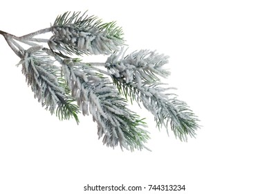 Christmas tree branch with snow, isolated on white background