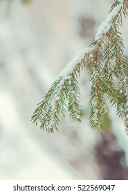 Christmas tree branch in snow and small pieces of ice
