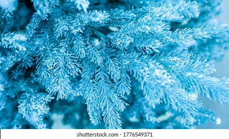 Christmas tree branch with snowflakes tinted in bright blue color, frosted needles of spruce. Festive Christmas backdrop background for design, New Year decoration.