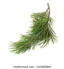 Christmas tree branches  isolated on white background. top view, flat lay. Christmas, New Year background.