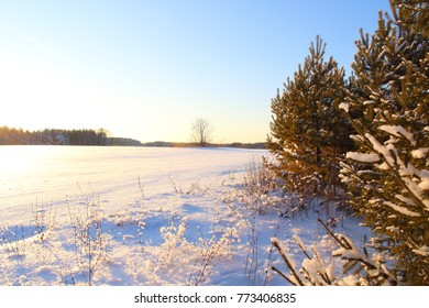 Christmas tree branches under the snow close up. Russia, December, 2017.