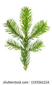 Christmas tree brunch isolated on white background. Spruce twigs