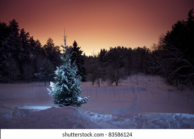 Christmas tree in calm winter evening