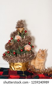Christmas tree with a cat on a scottish blanket.