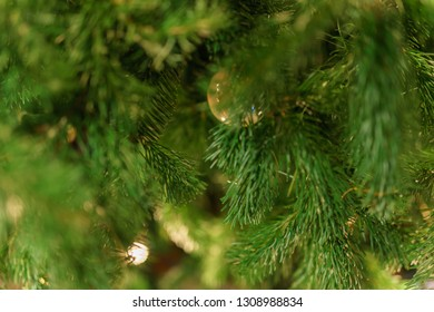 Christmas Tree in a Close Capture