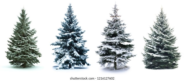 Christmas Tree collage. Christmas Tree in snow  isolated over white background - Shutterstock ID 1216127602