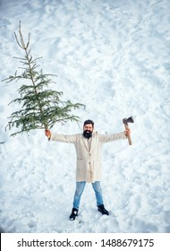 Christmas tree cut. Hipster woodsman with Christmas tree. Winter portrait of lumber in snow Garden cutting Christmas tree. Man is going to cut a Christmas tree