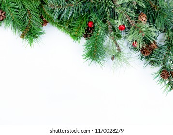 Christmas tree evergreen branches on white background