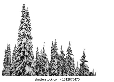 Christmas tree, firs in winter with snow isolated on white background - Shutterstock ID 1812875470