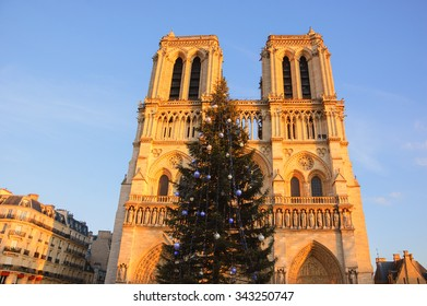 Christmas tree in front of the Notre Dame cathedral in golden sunset light. Paris, France.