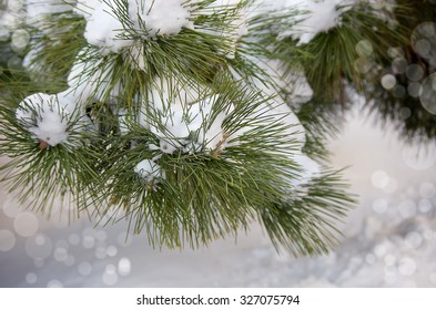 Christmas tree. Frozen coniferous branches covered with winter snow. Trendy selective focus.